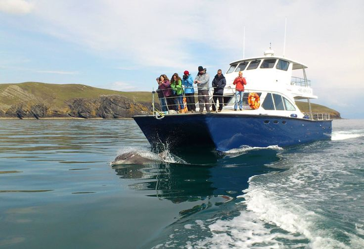 Shearwater Coastal Cruises