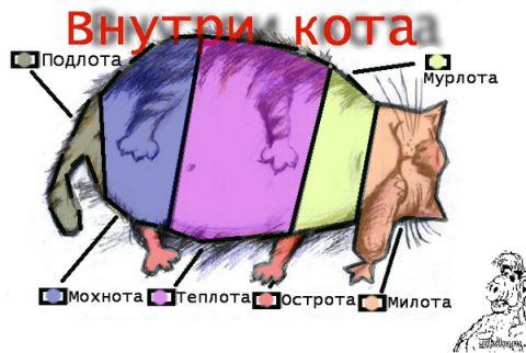 Внутри кота - Марина Юрьевна Хлучина