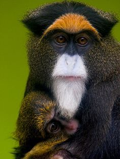 """""""In our country we call this type of mother love teng ai. My son has told me that in men's writing it is composed of two characters. The first means pain; the second means love. That is a mother's love."""" ― Lisa See, Snow Flower and the Secret Fan. [DeBrazza's Monkey. Pinned by PartyTalent.com]"""