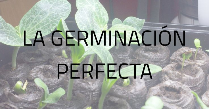 Nuevo artículo con el que germinar tus semillas sin ningún problema y con las…