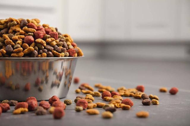 Canine Nutrition - Before You Choose a Dog Food