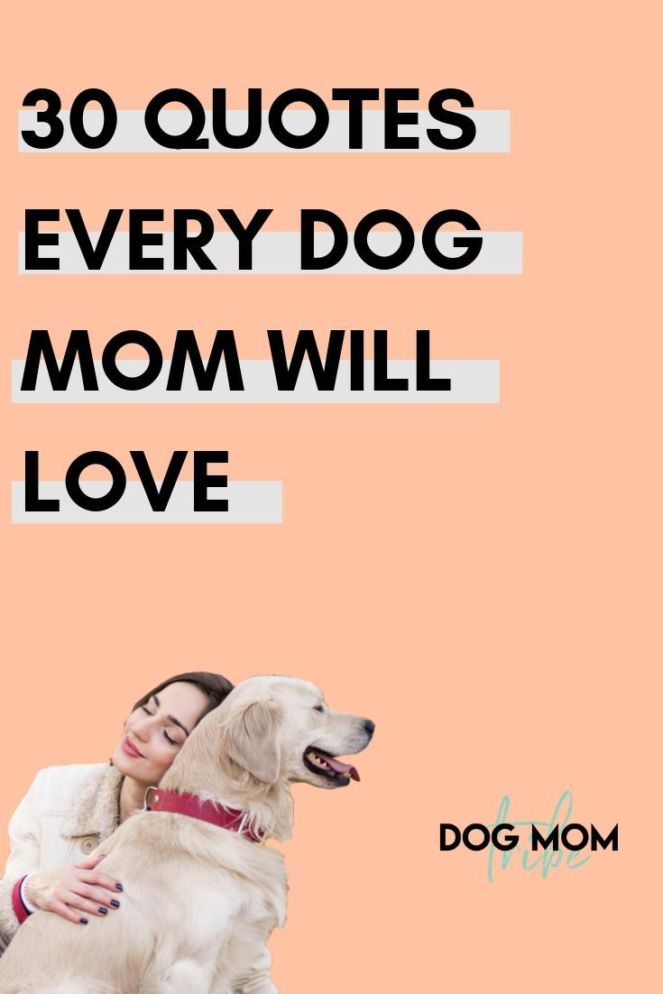 Pin On Quotes About Dogs