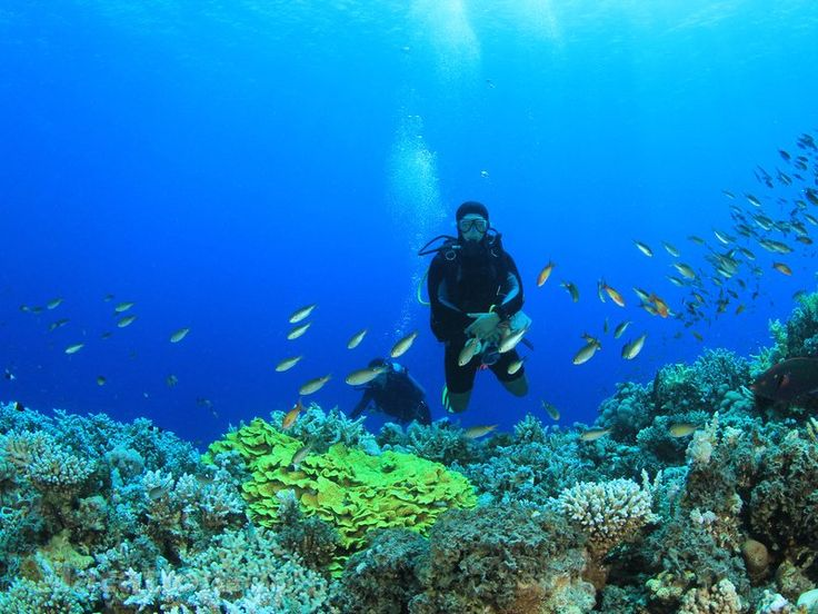 Enjoying Scuba Diving Adventure