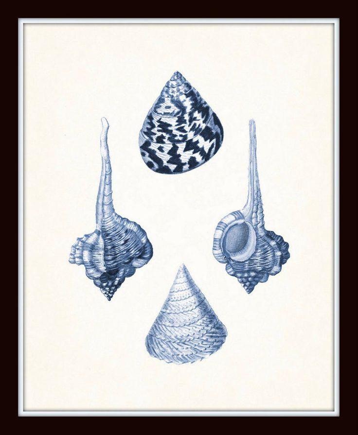Blue seashell print set no 1 antique shell prints print