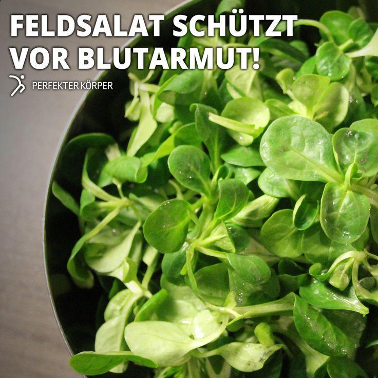 SPITZENREITER UNTER DEN SALATEN    In keinem anderem Salat steckt so viel Vitamin C wie im Feldsalat.    Feldsalat enthält viel Beta-Carotin, das gut für die Sehkraft ist.  Die Folsäure im Feldsalat ist wichtig für die Neubildung von Zellen.  Hoher Gehalt an Eisen, das unentbehrlich ist für den Sauerstofftransport im Körper. Zudem werden aus Eisen, Folsäure und Vitamin B12 rote Blutkörperchen im Knochenmark gebildet.  Sehr kalorienarm, etwa 15 kcal pro 100 g.