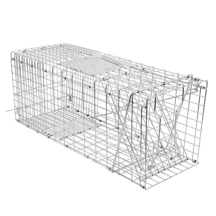 how to trap a raccoon in a cage
