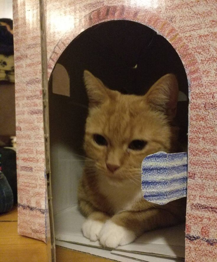 The #cat in her new cardboard home