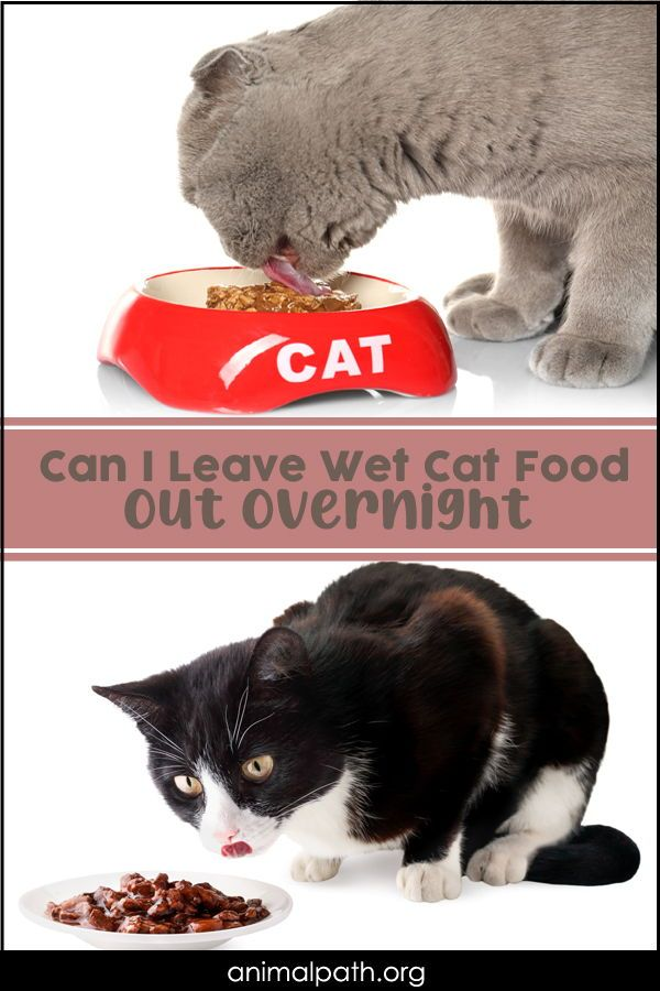 Can I Leave Wet Cat Food Out Overnight In 2020 Cat Food Wet Cat Food Cats