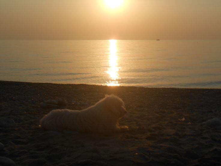 Leptokaria, Greece Sunshine and dog :D