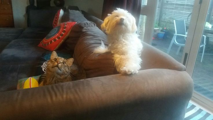Wooky Willow with his friend the cat Zuko! New Zealand.