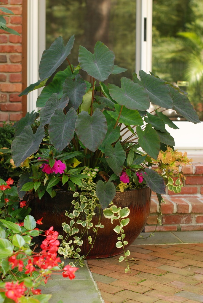 Flower Garden Ideas Shade 41 best shade loving flowers images on pinterest | plants