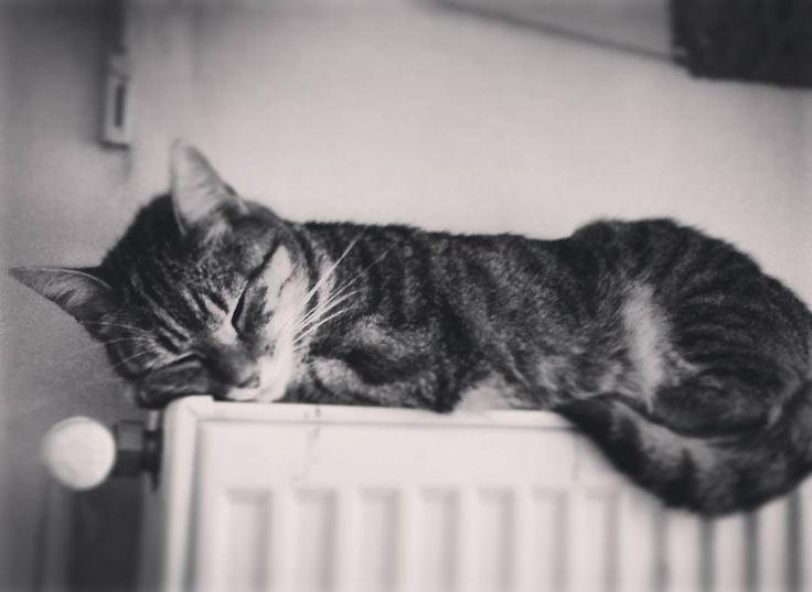 "59 aprecieri, 1 comentarii - Floraria Dorothy's (@florariadorothys) pe Instagram: ""Winter is coming... #grigore #catintheflowershop #clujcats #napocats #catsofcluj #cluj #clujnapoca…"""
