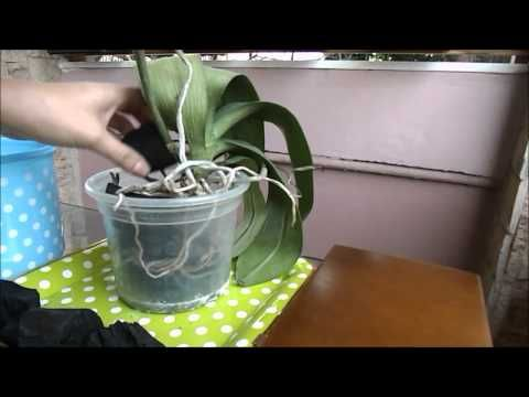 Plantando Orquídeas na Terra e mais dicas - YouTube