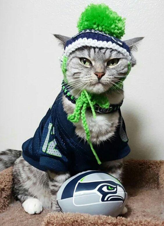 No kitten around...Go SEAHAWKS!!!