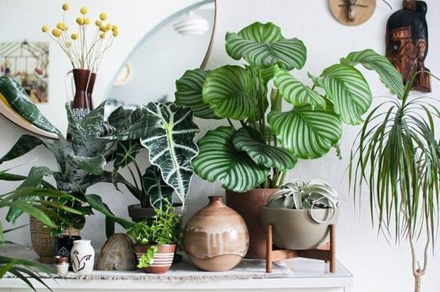 Folhagens com diversos tons de verde são uma ótima maneira de deixar a decoração mais fresca e acolhedora