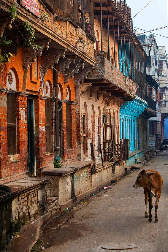 Cow in the City - Varanasi, India *** See more beautiful places at www.fabuloussavers.com/wplaces.shtml