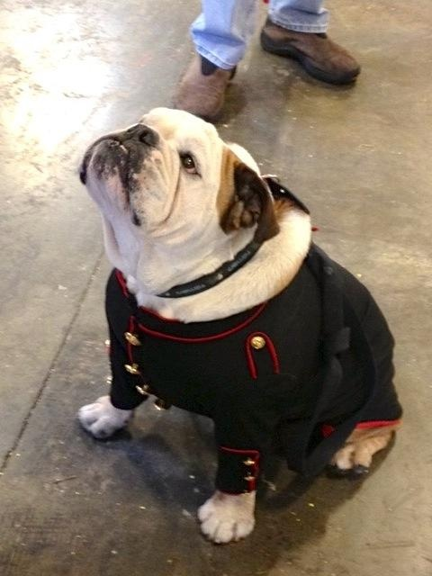 What do you think of my uniform? I'm proud to raise awareness for Military Working Dogs #Marines #Army #RosePets
