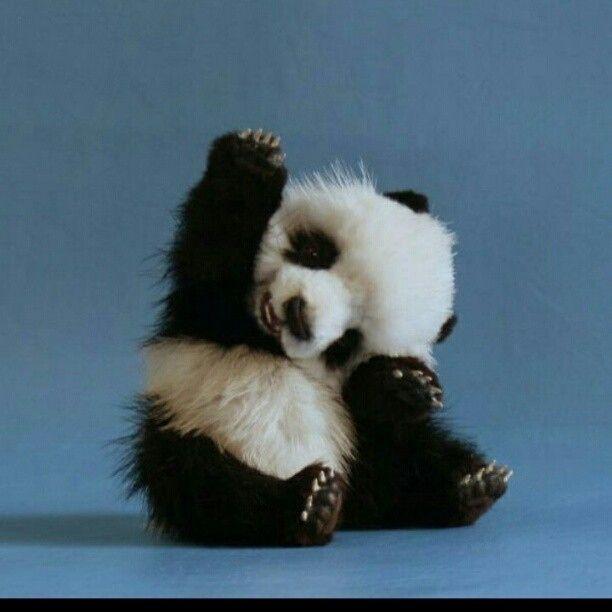 Omgooossshhhhh!!!Cutest Baby, Autism Awareness, Pandas Baby, High Five, Friends, God, Hands, Baby Animal, Baby Pandas Bears