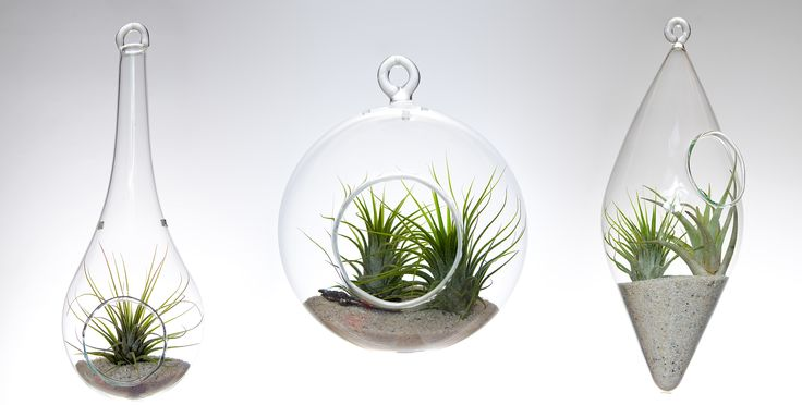 First terrariums made by Aerium.  This is borosilicate glass which is handmade, mouth-blown, with no mold. Plants are included. https://www.etsy.com/shop/Aerium