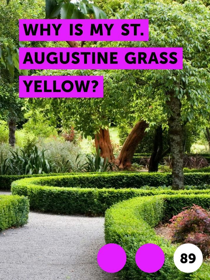 Why Is My St Augustine Grass Yellow Jade Plants Smoke Tree Weeds In Lawn