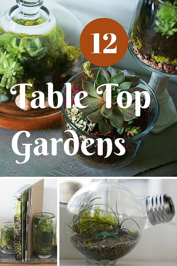 Terrariums are back! These 12 adorably small table top garden designs will make you rethink how you display houseplants.
