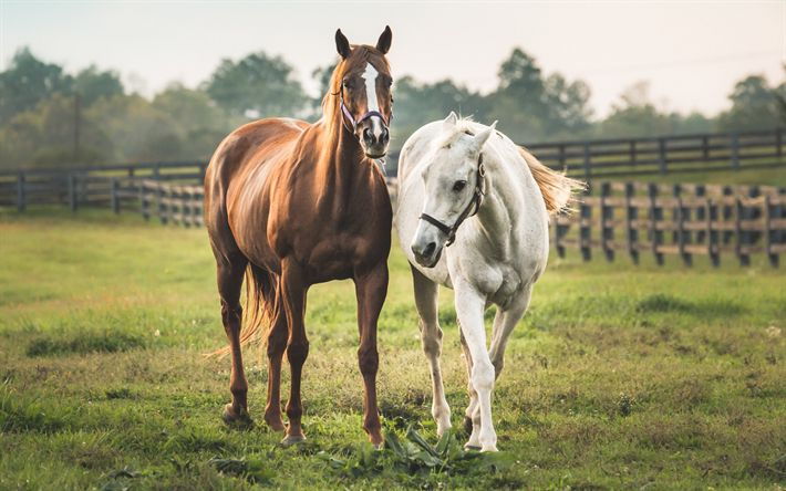 Download wallpapers horse, field, white horse, brown horse, farm