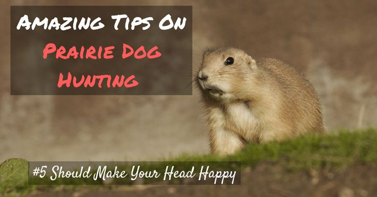 Equip yourself with six of these useful tips on prairie dog hunting as we give you the quickest guide on this fantastic leisure!