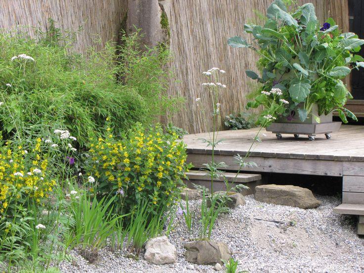 die besten 25 wachsenden pflanzen ideen auf pinterest g rtnern anbau von gem se und pflanzen. Black Bedroom Furniture Sets. Home Design Ideas