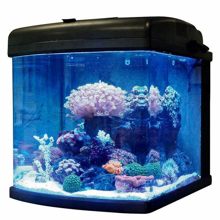 31 Best Aquariums And More Images On Pinterest Fish