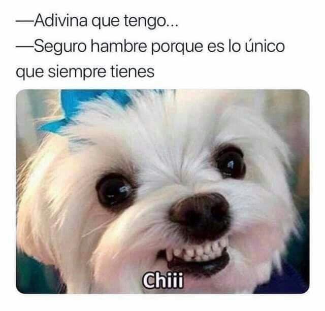 Pin De Emilia Cerbelli En La Vida Es Mejor Sonriendo Memes Divertidos Memes Graciosos Fotos De Humor