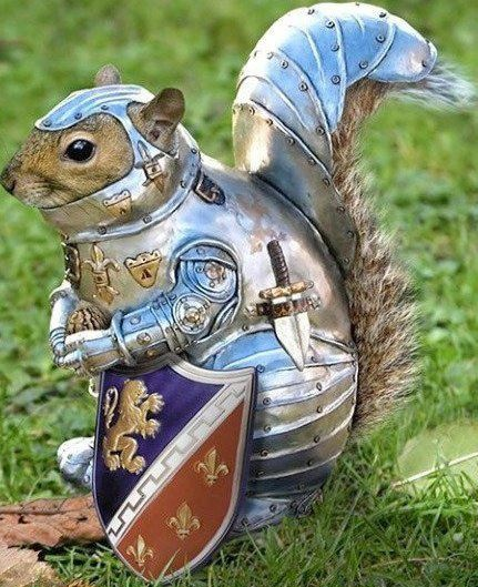 Animal Cosplay?: Squirrels, Birds Feeders, Knights, Funny Pictures, Armors, Games Of Thrones, Funny Animal, Photo Editing, Photo Effects