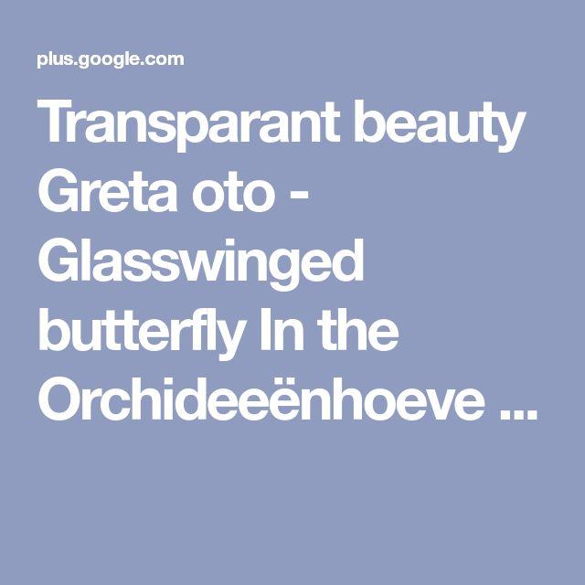 Transparant beauty Greta oto - Glasswinged butterfly In the Orchideeënhoeve ...