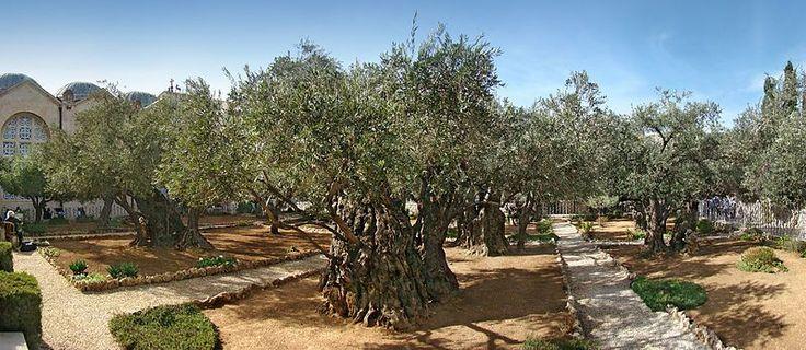 Holy Land - Garden Of Gethsemane