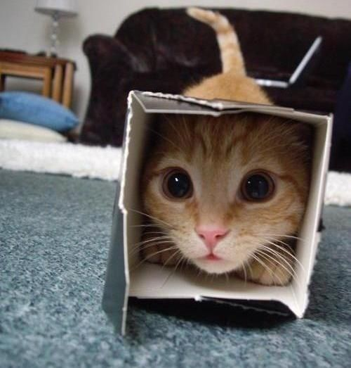 """""""What do you mean today is about hiding in boxes? That's literally insane."""" 
