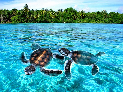marine sea turtles
