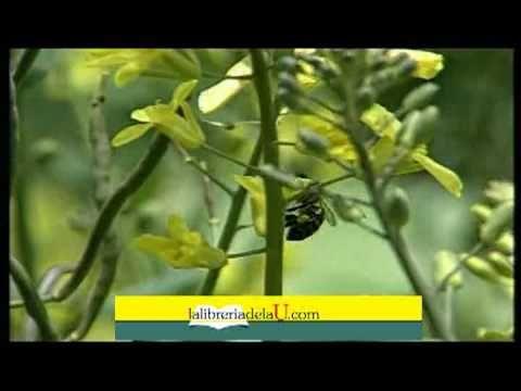Las abejas. La colmena