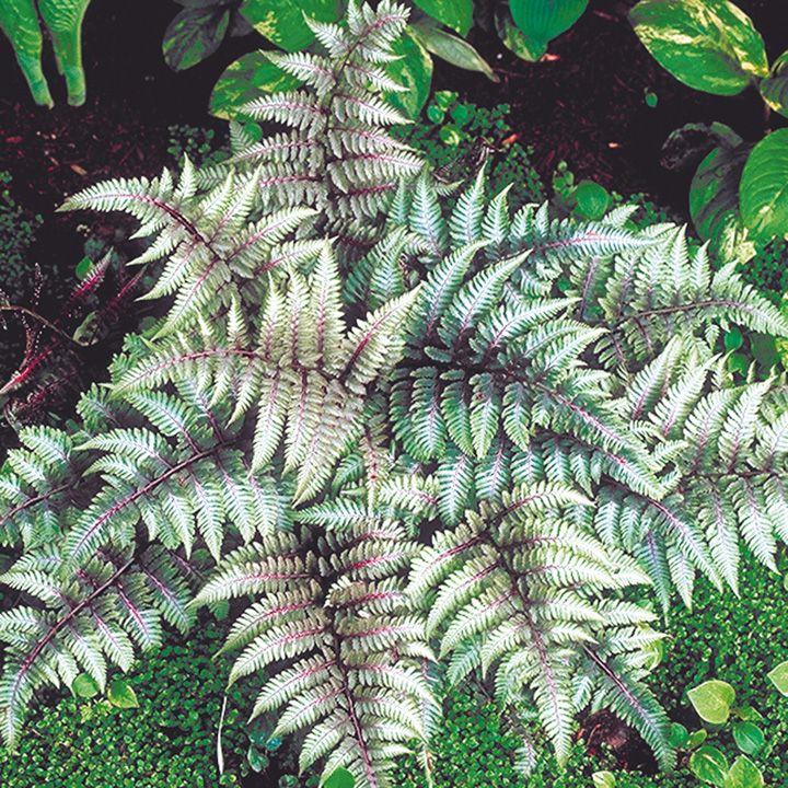 VIDA Leather Accent Tag - Ferns on a tree trunk by VIDA 3zj80Dsu9E