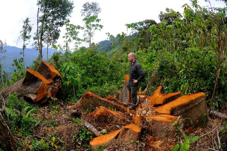 © Craig Jones - professional wildlife photographer. An expedition to Sumatra took him deep into the jungle, where he joined expert trackers working for the Sumatran Orangutan Society. Craig stands where a 300-year-old tree once stood. It was illegally felled within the Gunung Leuser National Park, a fully protected area in Sumatra.