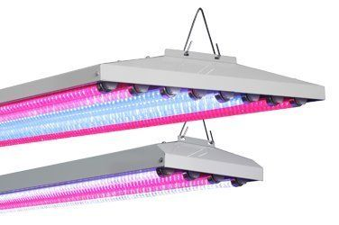 AgroLED T8 LED Fixture 48 - 4 ft 8 Lamp by AgroLED. $195.68. ###############################################################################################################################################################################################################################################################