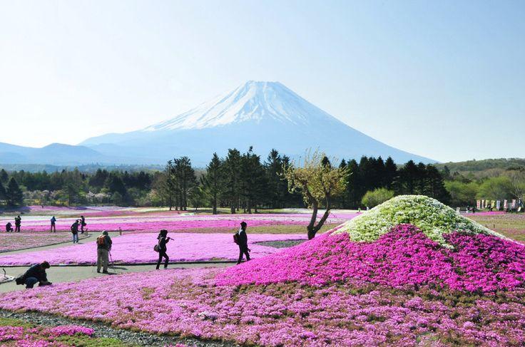Недалеко от горы Фудзияма были высажены белые и розовые цветы в форме главной вершины страны.