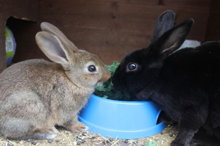 Sonny and Juniper enjoying a family meal
