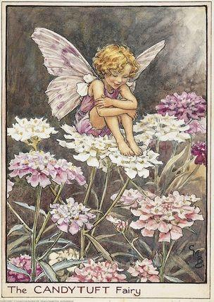 Cicely Mary Barker,(CMB) Flower Fairies print