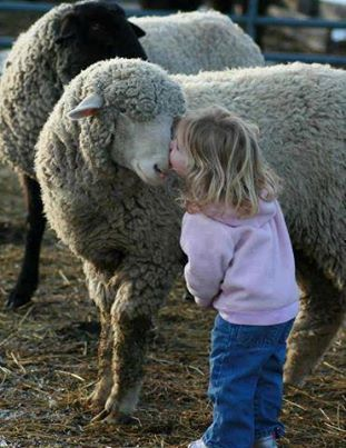 The sheep & the child .. friends