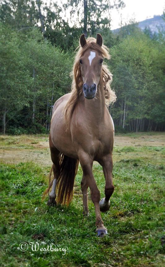 beautiful! Kinda reminds me of a mustang named Bear my Aunt owns.