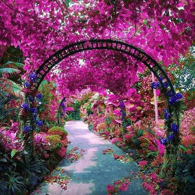 Jardín botánico de la orquídea de Singapur