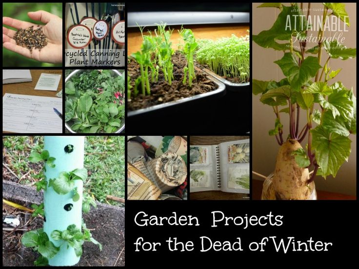 17 Best Images About Cool Weather Gardening On Pinterest Gardens How To Plant Garlic And