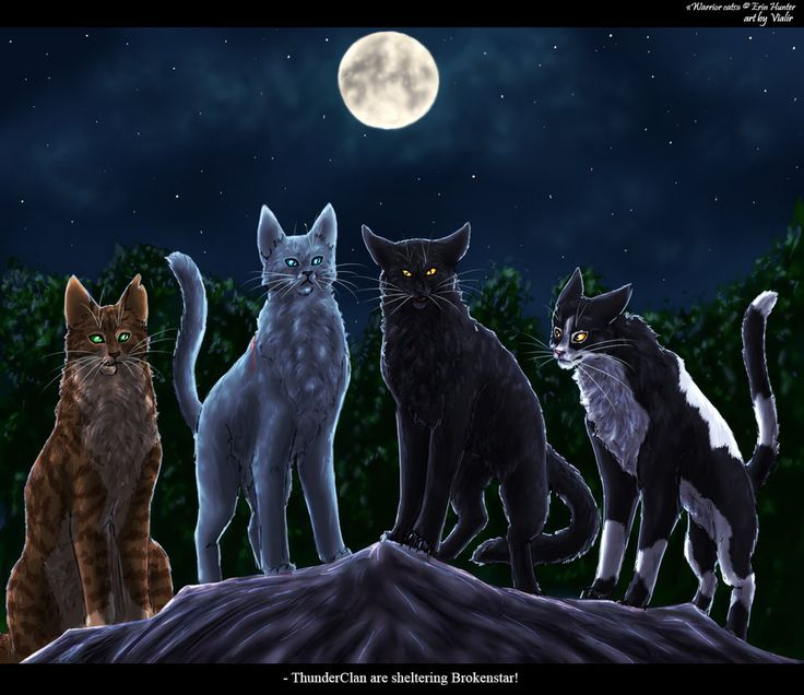 Which Dawn Of The Clans Warrior Cat Are You: Crookedstar, Bluestar, Nightstar And Tallstar Leaders At