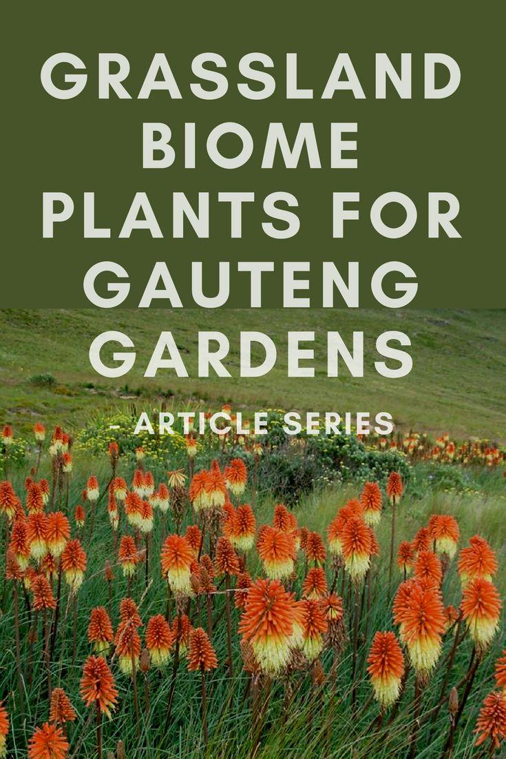 Grassland Biome Plants for Gauteng Gardens Article