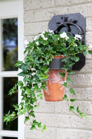 shoestring budget can still deliver high~end classic/chic. w / just Ivy & white impatiens potted in weathered terracotta, voila`!