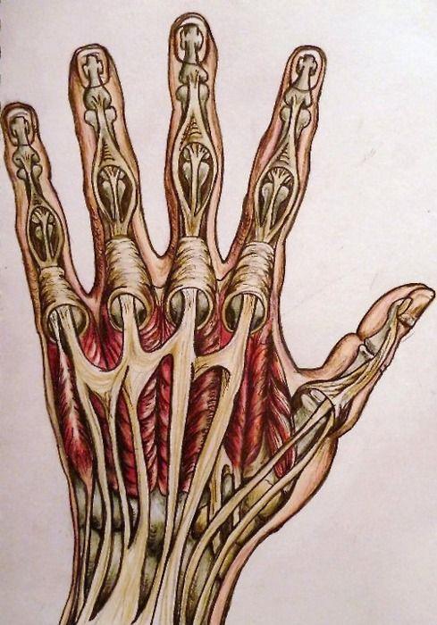 инстаграме фото кистей рук анатомия торт